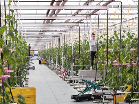 Cultivation companies